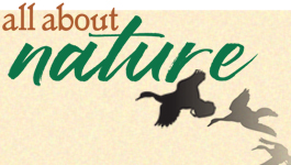 THIS WEEKEND…Checkout Audubon Wildlife Art & Craft Festival July 21 & 22